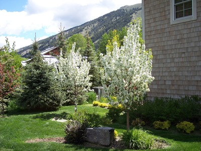 gallery/medium/0 (26)-Gardening-Sun-Valley-Idaho.jpg