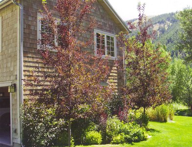gallery/medium/202 (19)-Gardeners-Ketchum-Idaho.jpg
