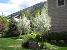 gallery/small/0 (26)-Gardening-Sun-Valley-Idaho.jpg