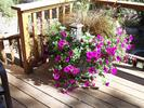 gallery/small/0 (5)-Landscaping-Ketchum-Idaho.jpg